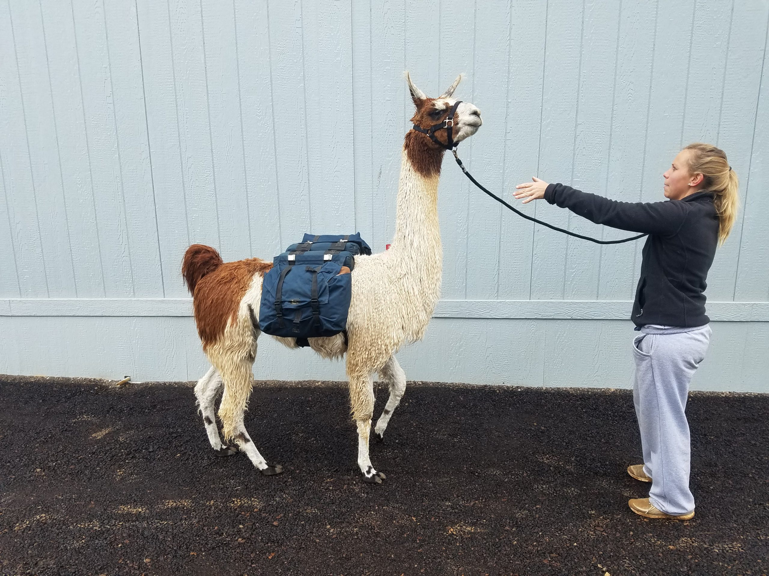 Leslie Lane Llama Farm-BridalBuzz-San Antonio Weddings
