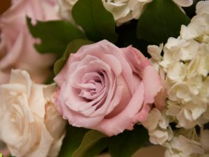 A pink rose close-up from Flair Floral