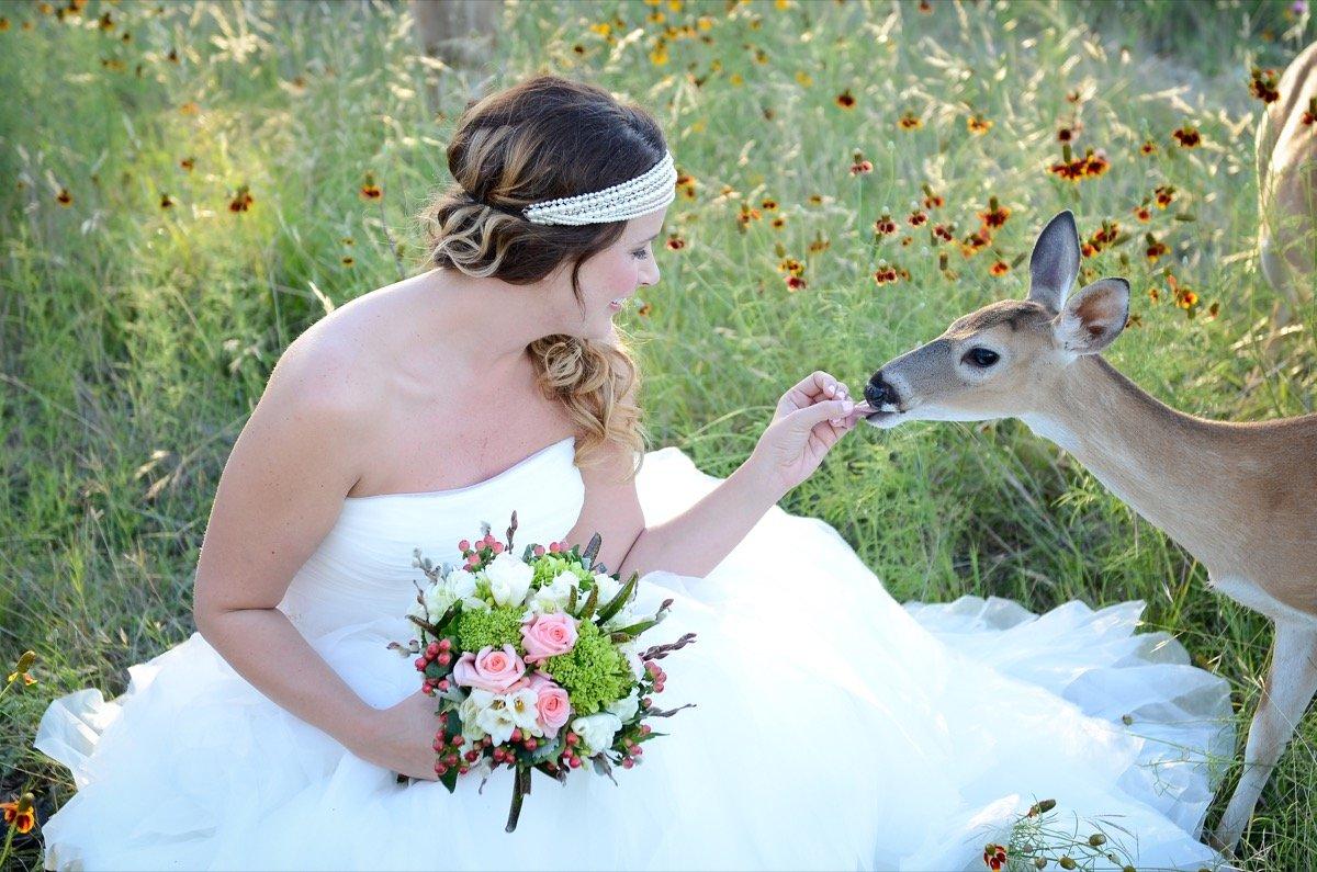 Canyon Lakeview Resort 0h deer!