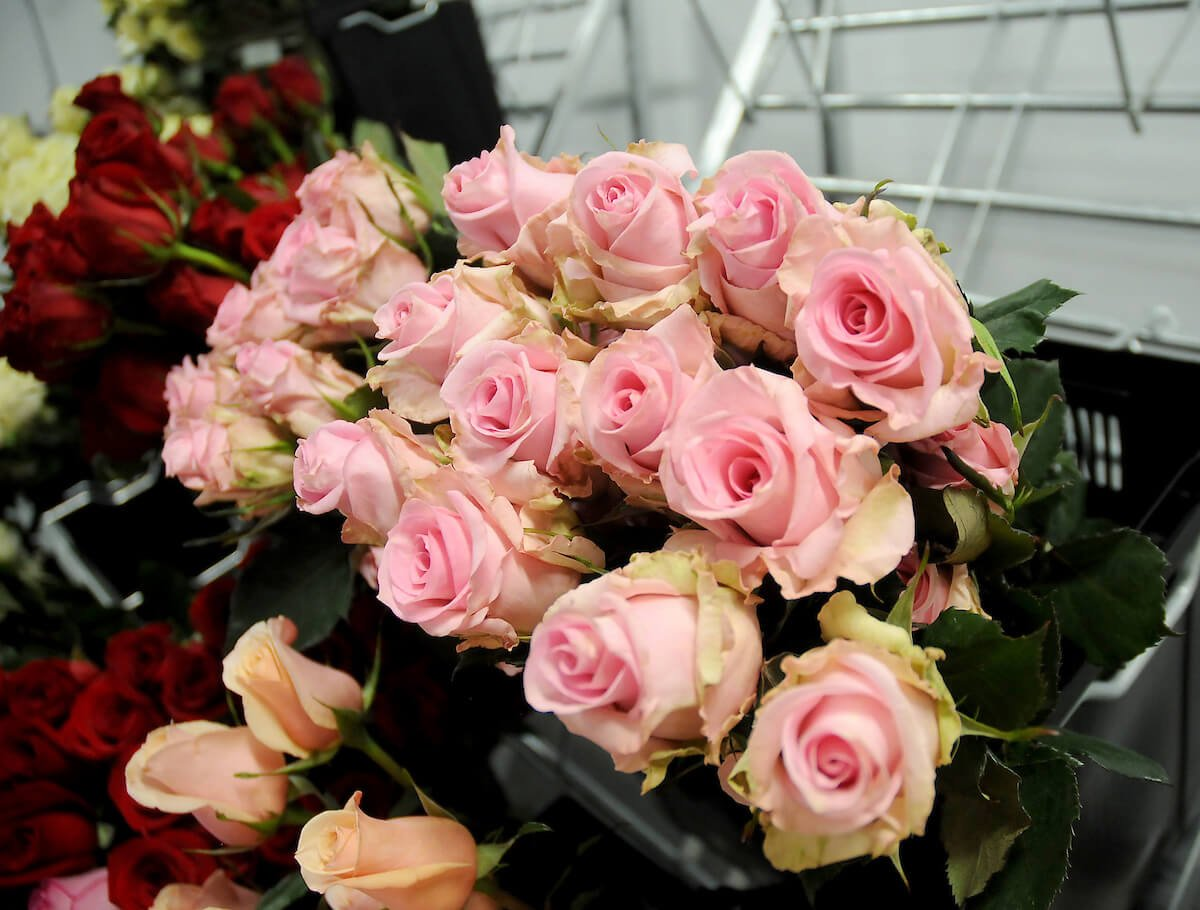 Blooms by HEB-pink roses