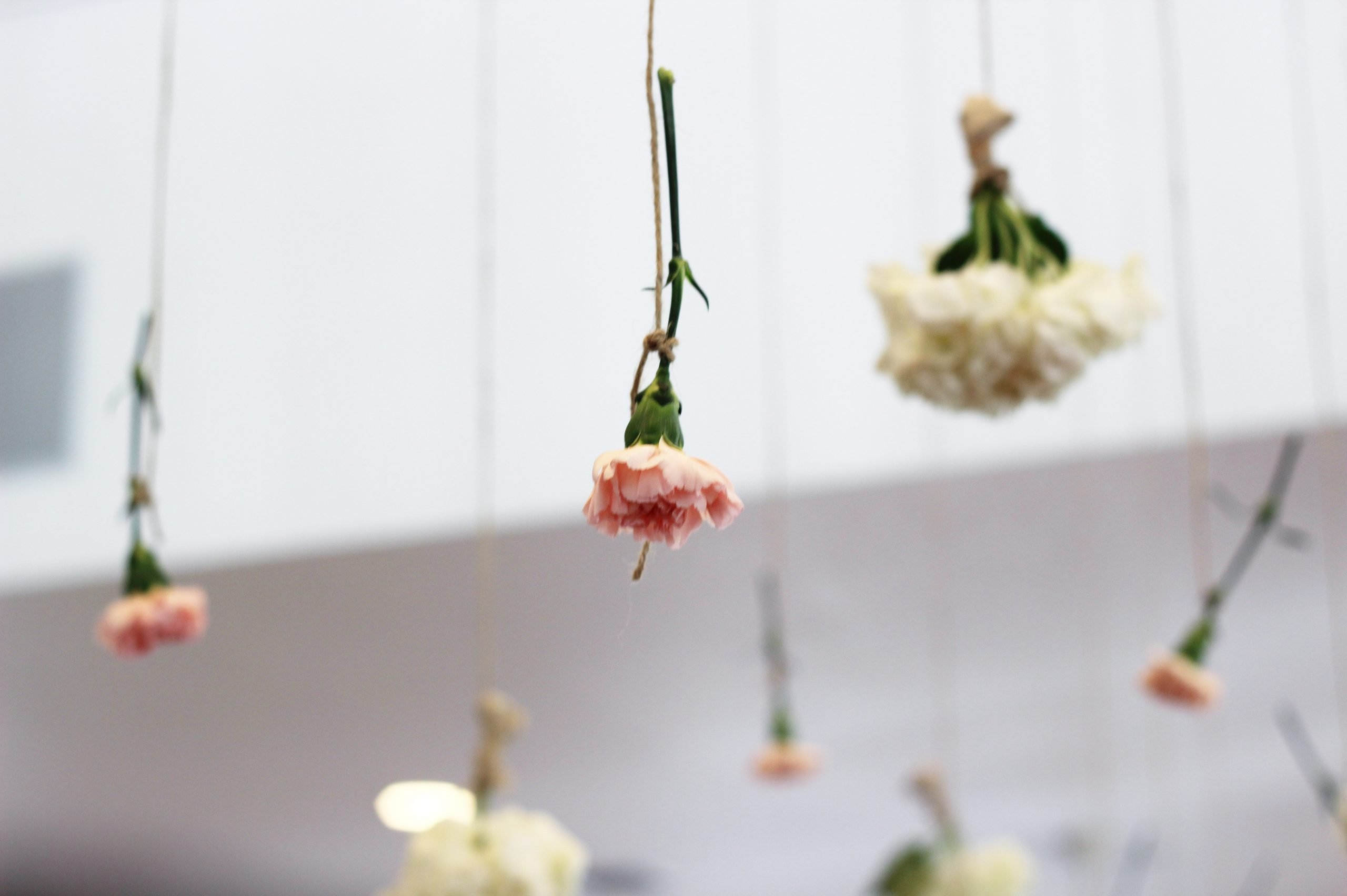 Blooms by HEB carnations in the air