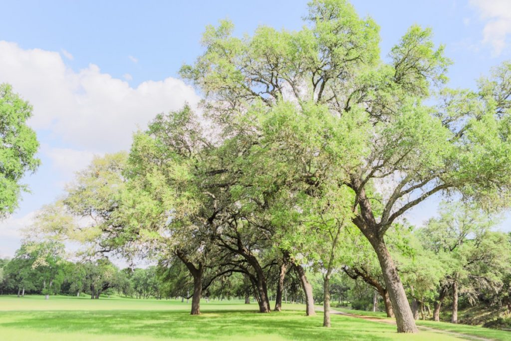 A view of the land surrounding Eagle Dance Ranch.
