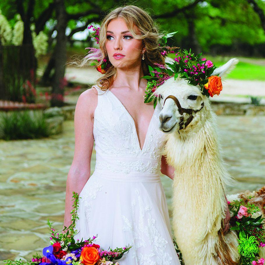 Leslie Lane Llamas