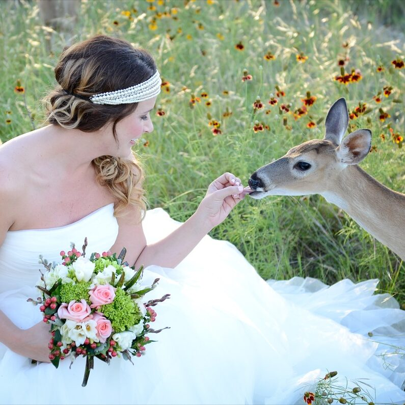 Bride is feeding a deer at Canyon Lakeview Resort.